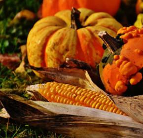 pumpkins300