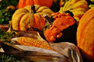 thanksgiving_pumpkins